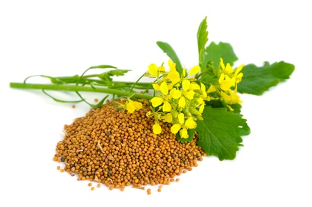 mustard plant: Mustard flowers and seed. On a white background.