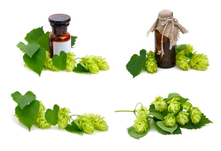 Hop plant and pharmaceutical bottles on white background. photo