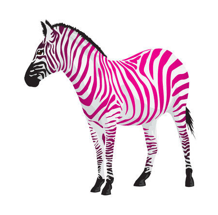 Zebra with strips of pink color illustration. Illustration