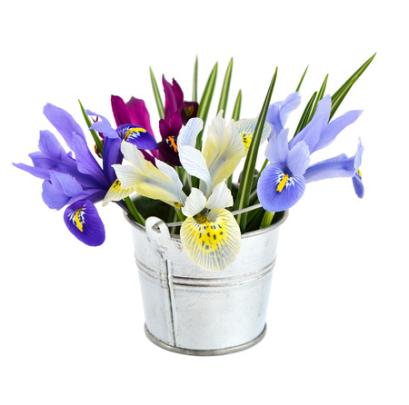 dwarfish: Small bucket with iris. Isolated on white background.