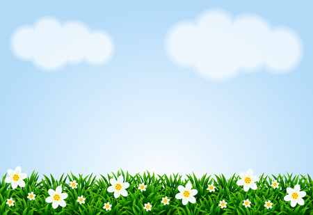 Landscape with grass and camomiles. Vector illustration.