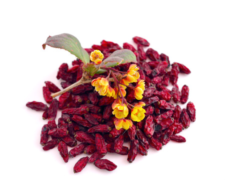 barbery: Flower of a barberry and dried fruits. Isolated.