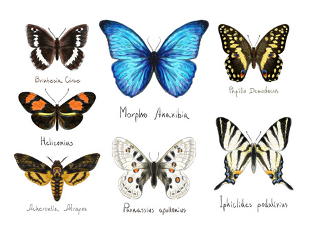 inachis: Butterflys set. Watercolor imitation.