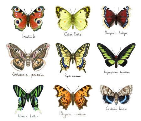 Butterflys set. Watercolor imitation.