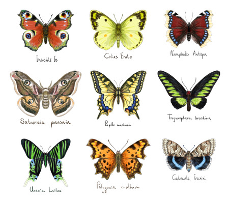 morpho: Butterflys set. Watercolor imitation.