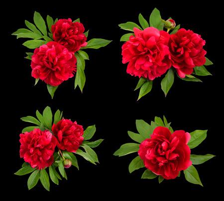 abloom: Peon�as rojas sobre un fondo negro. Ilustraci�n del vector.