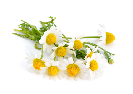 Chamomile isolated on white background. Imagens