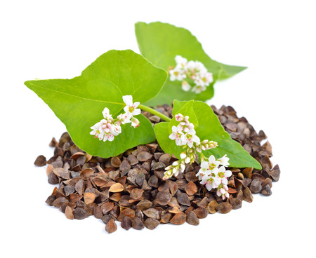 Buckwheat with flowers isolated. photo