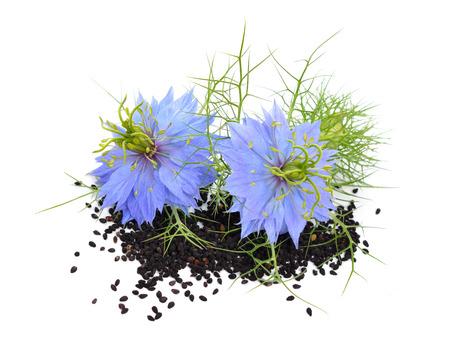 Nigella sativa lub kopru kwiat, kwiat gałka muszkatołowa, czarny kminek, Roman kolendra, czarny kminek, czarny sezam, blackseed, czarny kminek, Bunium persicum. Samodzielnie.