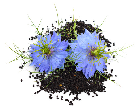 Nigella sativa or fennel flower, nutmeg flower, black caraway, Roman coriander, black cumin, black sesame, blackseed, black caraway, Bunium persicum. Isolated. photo