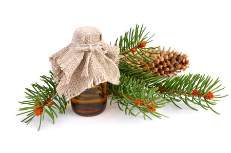 Spruce twig with pharmaceutical bottle isolated