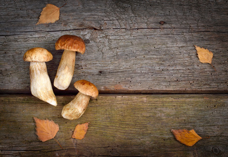 stipe: Background with forest mushrooms.