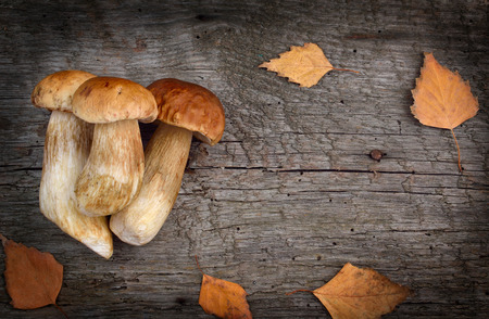 delikatesse: Background with forest mushrooms.