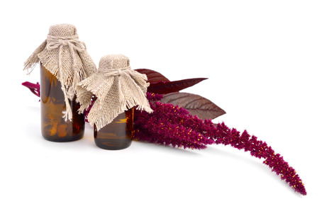 Amaranth oil with twig isolated. photo