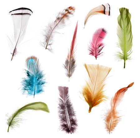 Collection of different color feathers. Isolated on white background. Standard-Bild