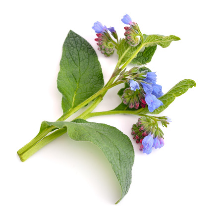 Symphytum (comfrey) isolated