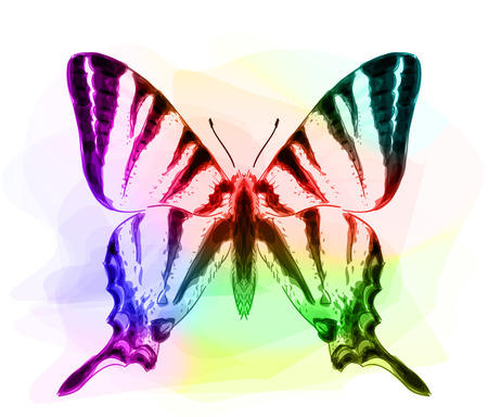 inachis: Butterfly. Iridescen colours. Vector illustration. Illustration