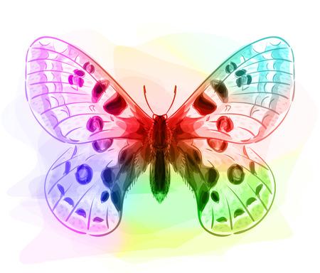 inachis: Butterfly. Iridescen colours. Vector illustration. Illustration