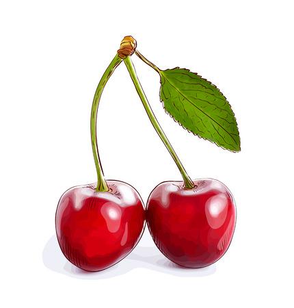 bing: Cherry. Vector illustration.