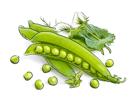 large group of object: Pea pods. Vector illustration.