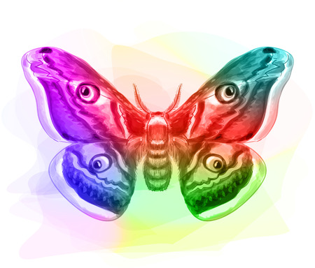 out of body: Butterfly. Iridescen colours. Vector illustration. Illustration