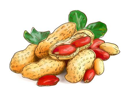 healthy path: Peanuts. Vector illustration. Illustration
