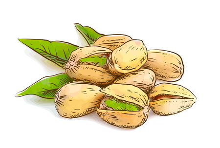 pistachios: Pistachios. Vector illustration. Watercolor imitation.