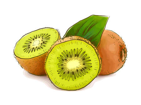 healthful: Kiwi. Vector illustration. Illustration