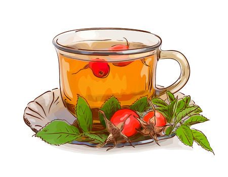 dogrose: Tea from a dogrose. Vector illustration. Illustration