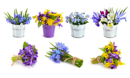 flores moradas: Flores del resorte fijados. Aislado en el fondo blanco. Foto de archivo