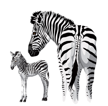 zebra pattern: Zebra with a foal. Vector illustration.