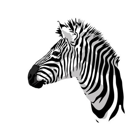 llanura: Retrato de las cebras. Ilustración del vector.