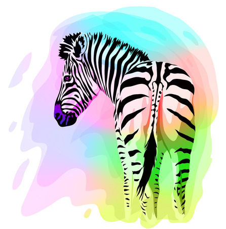 closeup: Rainbow Zebra portrait. Vector illustration. Watercolor imitation.