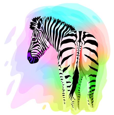 zebra face: Rainbow Zebra portrait. Vector illustration. Watercolor imitation.