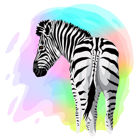 Zebra on abstract bright background. Vector illustration.