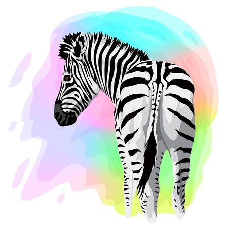 zebra head: Zebra on abstract bright background. Vector illustration.