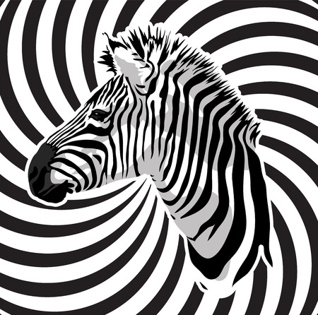 national parks: Zebra portrait on abstract strips background. Vector illustration.