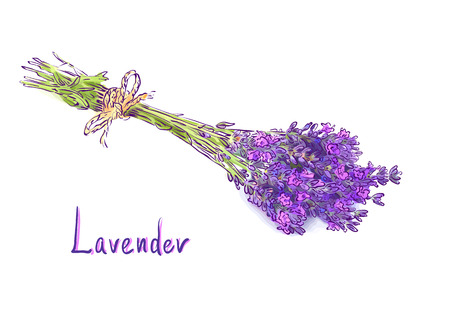 lavender flower: Lavender bunch with a jute rope. Sketch with watercolor imitation texture. Vector illustration.