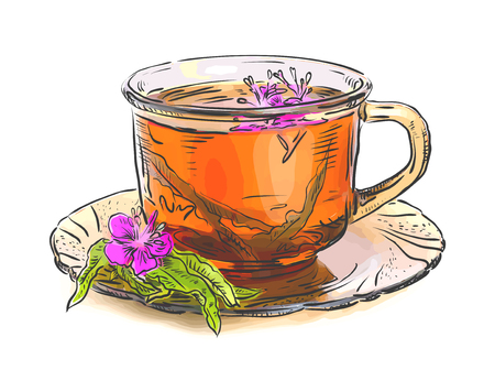 perennial: Tea with rosebay willowherb in  glass. Sketch with watercolor imitation texture. Vector illustration.