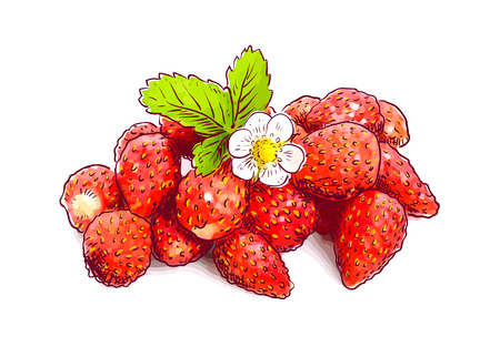 Wild strawberry with flower. Sketch with watercolor imitation texture. Vector illustration.
