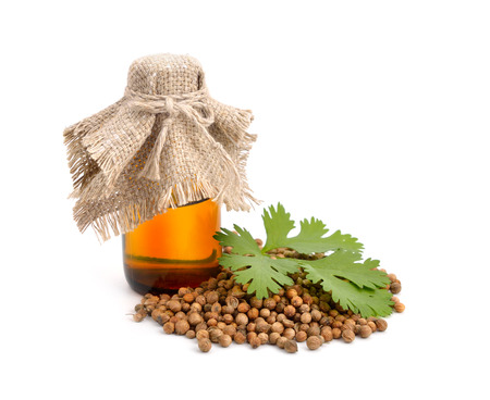 coriander: Essential oil of a coriander. Isolated.