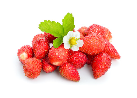 Wild strawberry with flower. Isolated on white background.