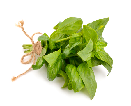 basil: The basil bunch with a jute rope Stock Photo