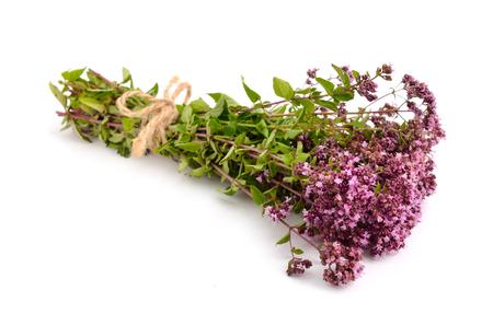 oregano: Oregano flowers isolated