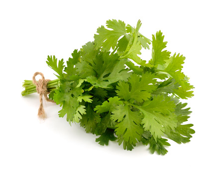 bunch of: Bunch of coriander. Isolated. Stock Photo