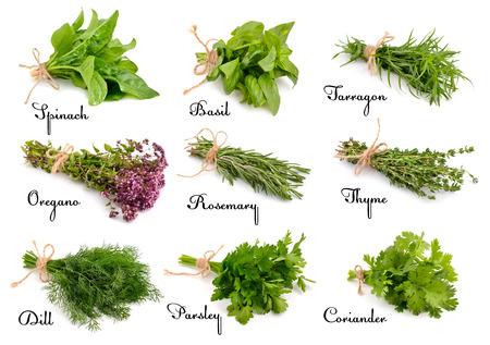 albahaca: Colección de hierbas y especias para cocinar. Aislado en el fondo blanco.