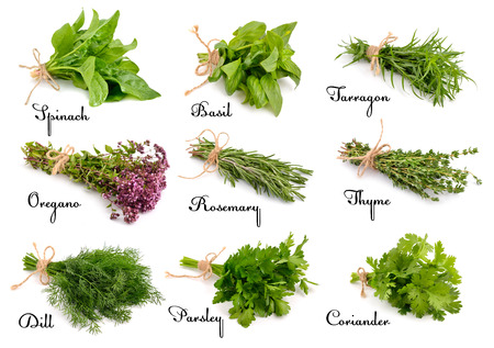 vegetarian food: Collection of cooking herbs and spices. Isolated on white background.