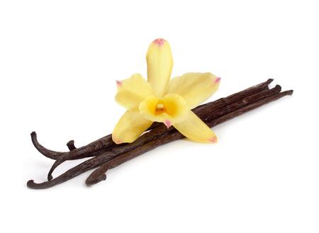 Vainas de vainilla con orquídea amarilla. Aislado en el fondo blanco.