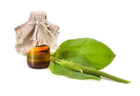 pharmaceutical bottle: Greater Plantain, Plantago major or Soldiers Herb with pharmaceutical bottle isolated.