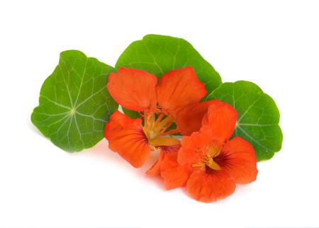 Nasturtium flowers isolated. Zdjęcie Seryjne